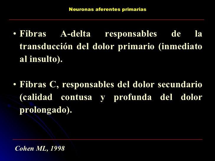 <ul><li>Fibras A-delta responsables de la transducción del dolor primario (inmediato al insulto). </li></ul><ul><li>Fibras...