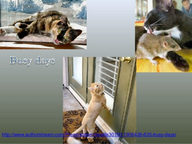 http://www.authorstream.com/Presentation/mireille30100-1906426-635-busy-days/