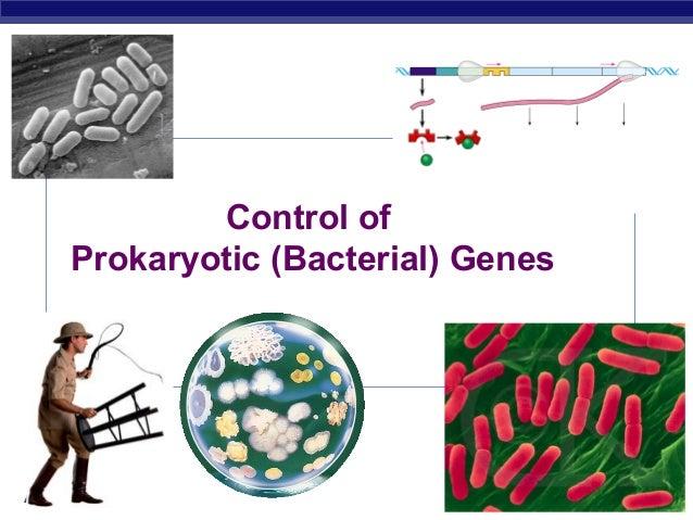 Control of Prokaryotic (Bacterial) Genes  AP Biology  2007-2008