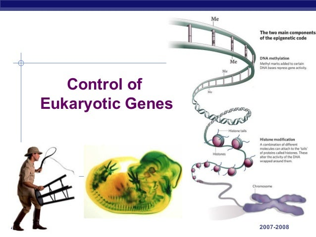 Control of       Eukaryotic GenesAP Biology                2007-2008