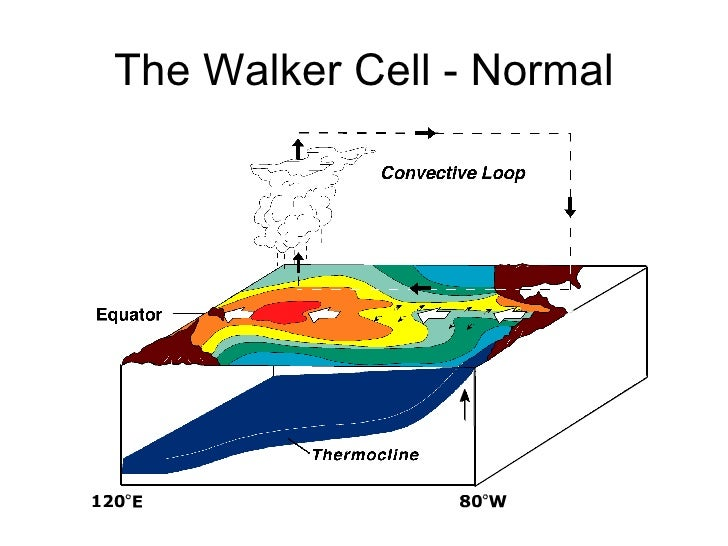 The Walker Cell - Normal