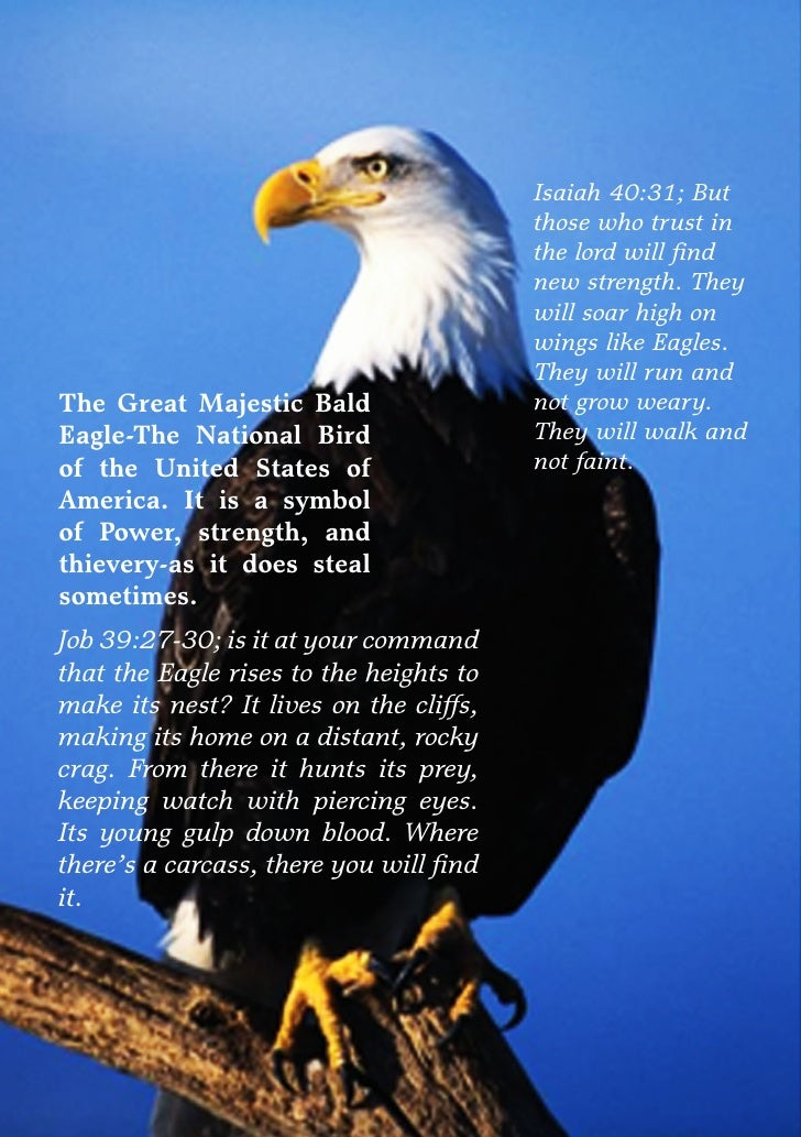the parable of the eagle Eagle parable question #2 october 29, 2012 colin penley my human geo classes: a continuation of the last assignment please answer the following question in the.