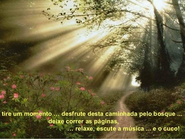 tire um momento … desfrute desta caminhada pelo bosque ...              deixe correr as páginas,                    … rela...
