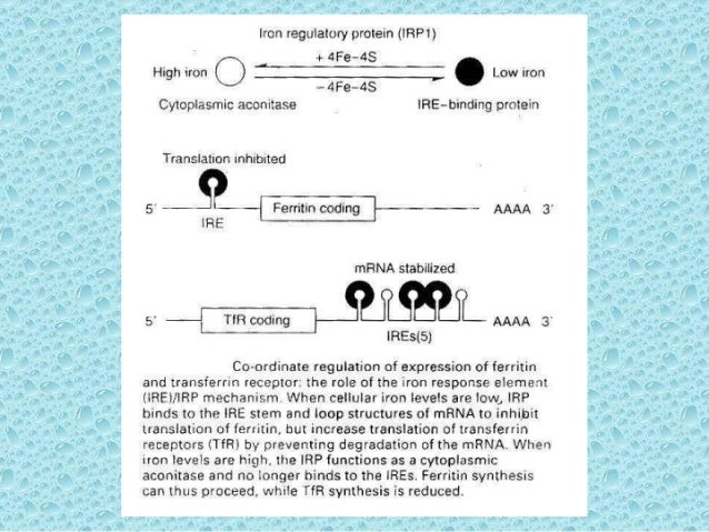 anemii-hipocrome
