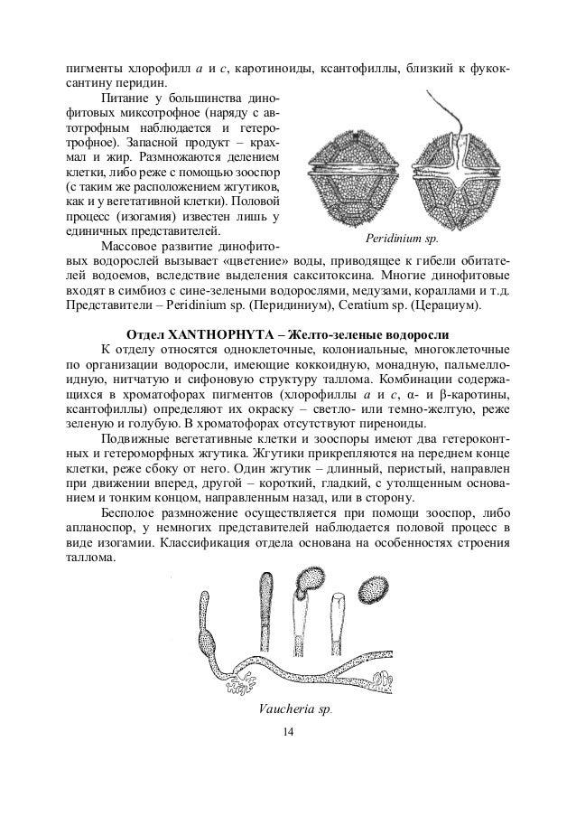окраска таллома вольвокса и пигменты
