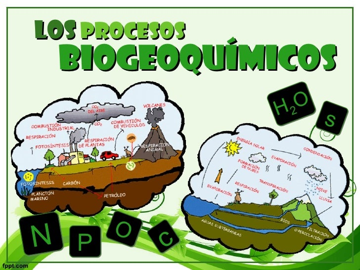 Los   procesos BIOGEOQUÍMICOS H 2 O s P N c O