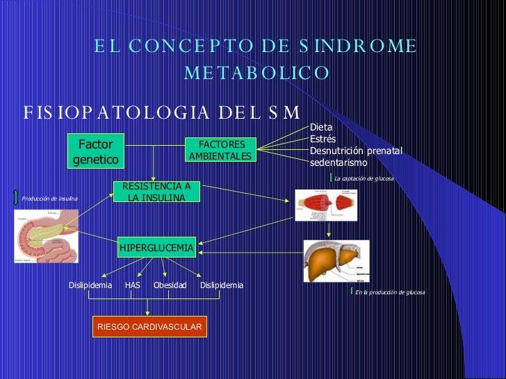 68. FisiopatologíA Diabetes Mellitus Y Sindrome Metabolico