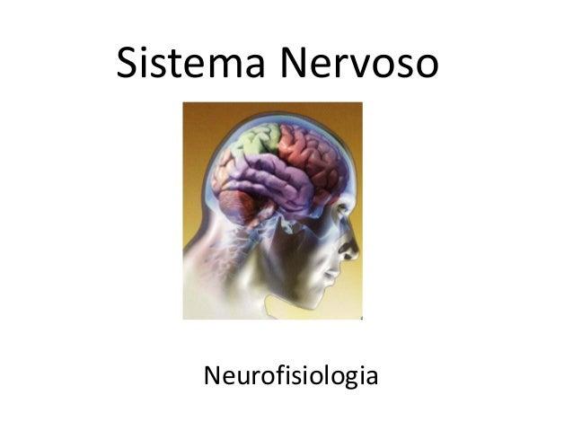 Sistema Nervoso Neurofisiologia