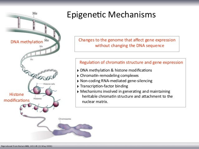 What is DNA methylation?
