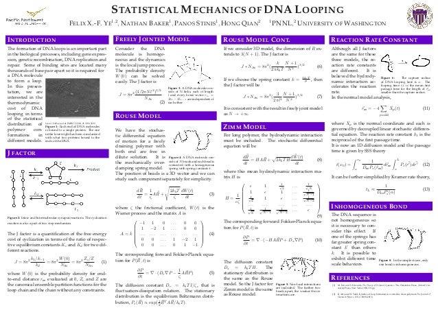 STATISTICAL MECHANICS OF DNA LOOPING FELIX X.-F. YE 1,2 , NATHAN BAKER 1 , PANOS STINIS 1 , HONG QIAN 2 1 PNNL,2 UNIVERSIT...