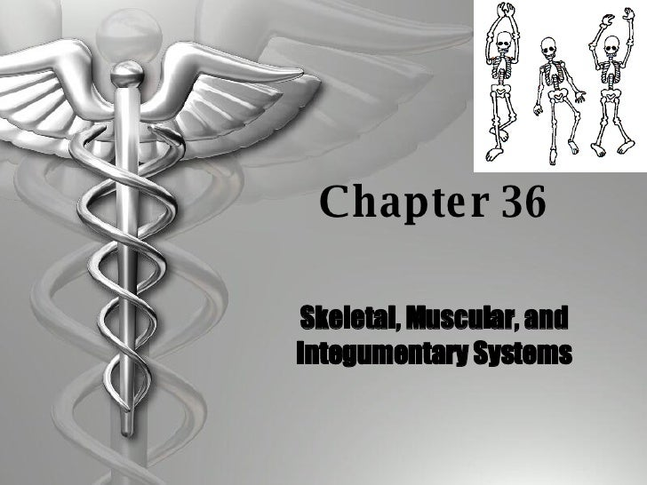 Chapter 36 Skeletal, Muscular, and Integumentary Systems