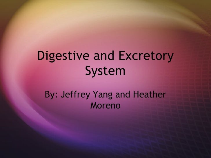 Digestive and Excretory System By: Jeffrey Yang and Heather Moreno