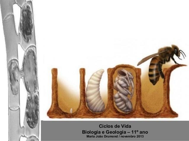 Ciclos de Vida Biologia e Geologia – 11º ano Maria João Drumond / novembro 2013