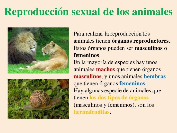 5 seres vivos con reproduccion asexual