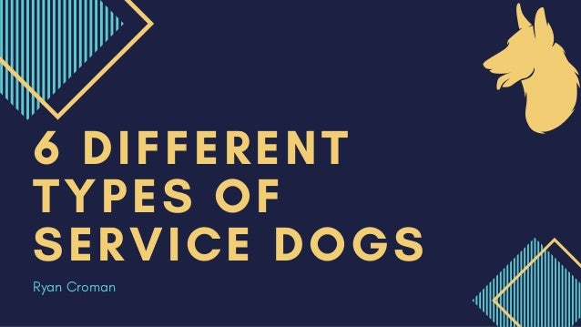 6 DIFFERENT TYPES OF SERVICE DOGS Ryan Croman