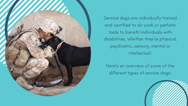 6 Different Types of Service Dogs Slide 2