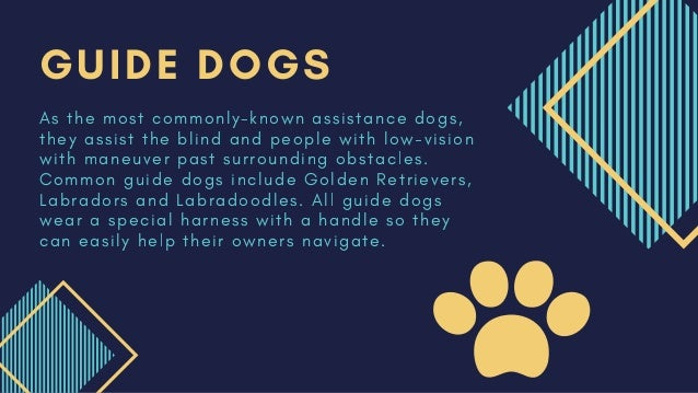 6 Different Types of Service Dogs Slide 3