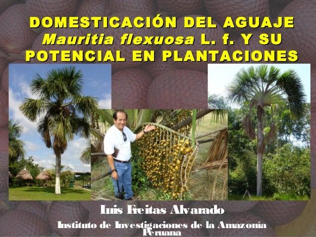 Luis Freitas Alvarado Instituto de Investigaciones de la Amazonía Peruana DOMESTICACIÓN DEL AGUAJEDOMESTICACIÓN DEL AGUAJE...