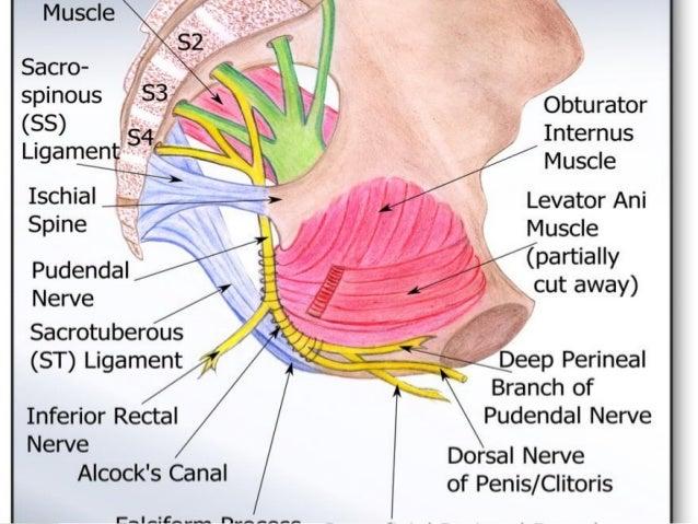 Interdisciplinary Management Of Complex Pelvic Pain Revised