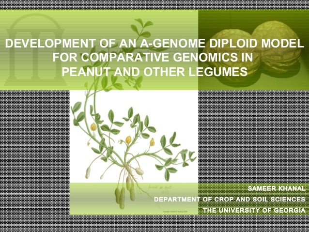 SAMEER KHANAL DEPARTMENT OF CROP AND SOIL SCIENCES THE UNIVERSITY OF GEORGIA DEVELOPMENT OF AN A-GENOME DIPLOID MODEL FOR ...