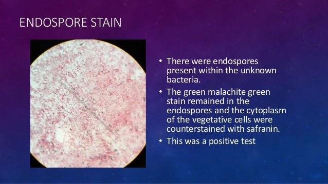 unknown project microbiology Result from the mannitol fermentation test it was decided that unknown #545 was enterococcus faecalis.