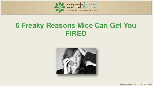 6 Freaky Reasons Mice Can Get You FIRED  www.earth-kind.com  1.800.583.2921