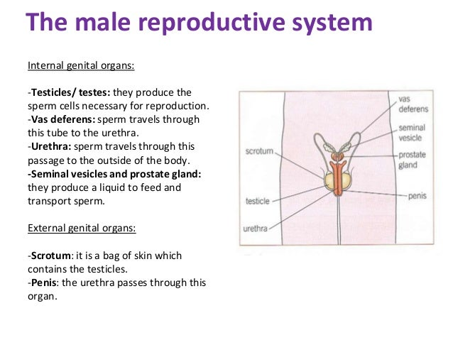 Remarkable, characteristics of sperm
