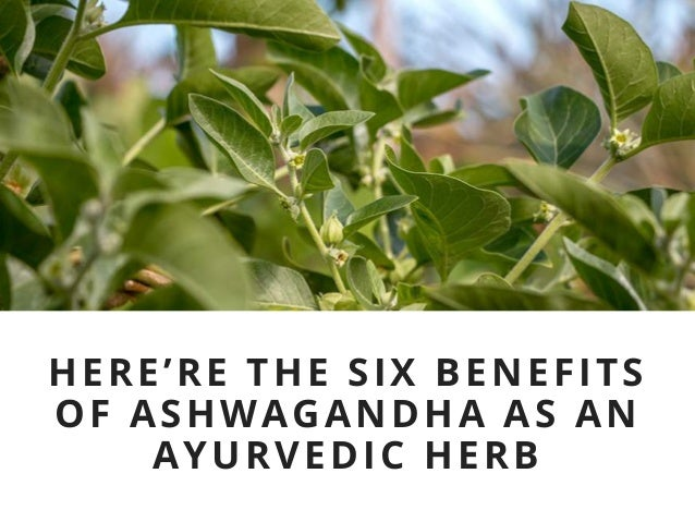 6 immense health benefits of ashwagandha observed in