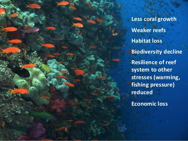 coral reef decrease As coral reef habitat decreases due to bleaching, reef associated fish populations also decrease, which affects fishing opportunities a model from one study by speers et al calculated direct losses to fisheries from decreased coral cover to be around $49 - $69 billion, if human societies continue to emit high levels of greenhouse gases [71.