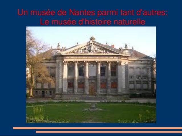 Un musée de Nantes parmi tant d'autres: Le musée d'histoire naturelle