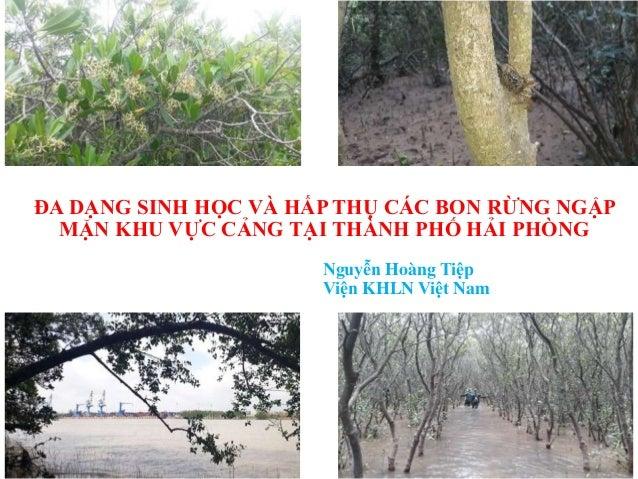ĐA DẠNG SINH HỌC VÀ HẤP THỤ CÁC BON RỪNG NGẬP MẶN KHU VỰC CẢNG TẠI THÀNH PHỐ HẢI PHÒNG Nguyễn Hoàng Tiệp Viện KHLN Việt Nam