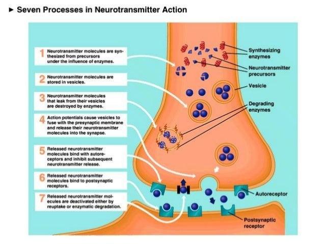serotonine hersenen