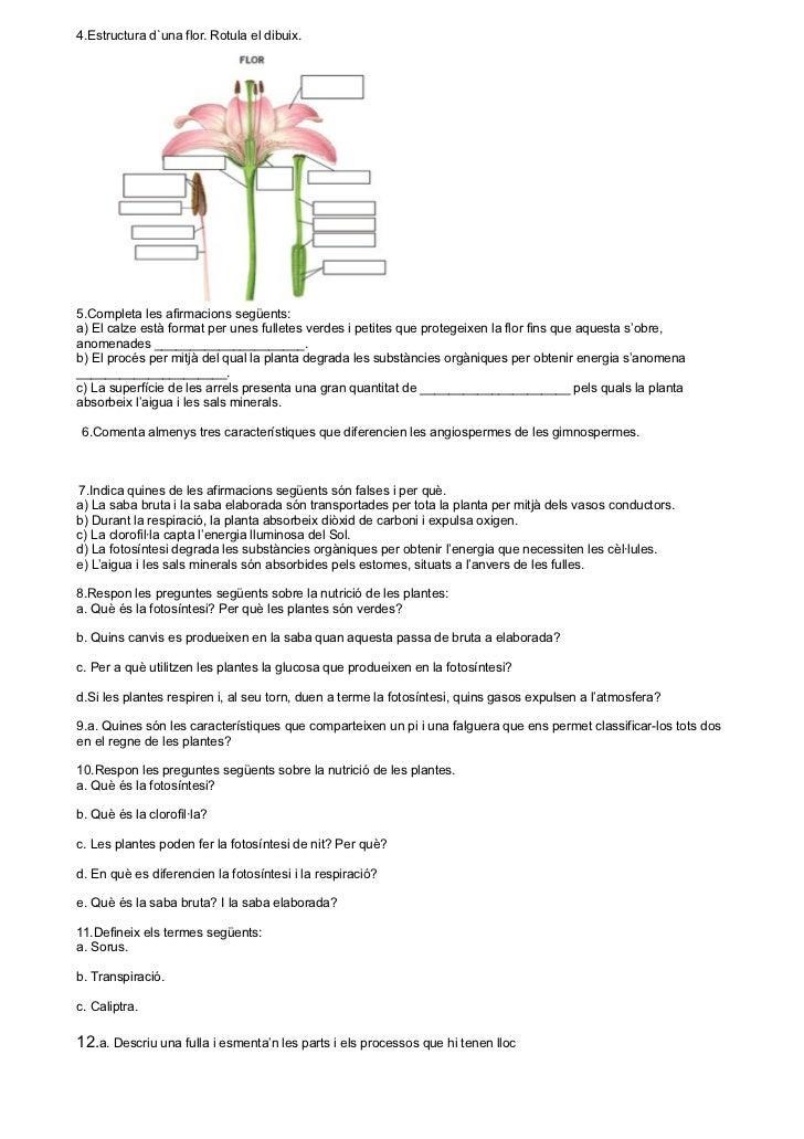 6 pagines Slide 2