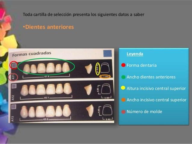 ¿Cual juego de dientes escojo con respecto al ancho? Alternativas de selección Procedimiento Ancho dientes artificiales me...