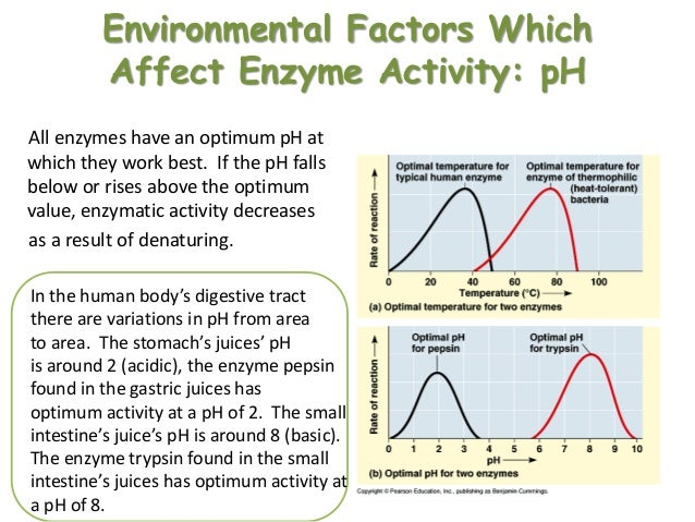 how does ph level affect enzyme activity Ap biology how do (1) temperature and (2) ph affect the activity of this enzyme include a discussion of the relationship between the structure and the fuction of.