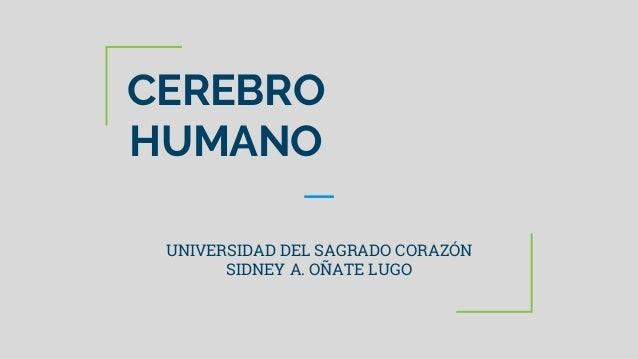 CEREBRO HUMANO UNIVERSIDAD DEL SAGRADO CORAZÓN SIDNEY A. OÑATE LUGO
