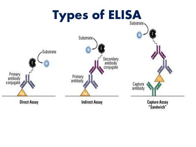 Antigen Antibody Reaction Elisa Antigen Antibody techn...