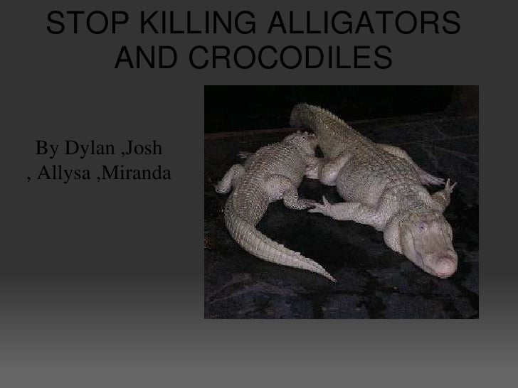 STOP KILLING ALLIGATORS      AND CROCODILES    By Dylan ,Josh , Allysa ,Miranda