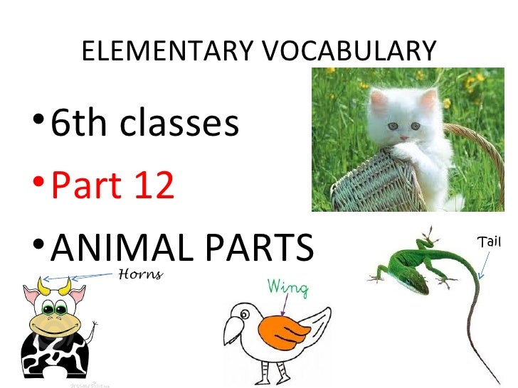ELEMENTARY VOCABULARY• 6th classes• Part 12• ANIMAL PARTS    Horns                          Tail