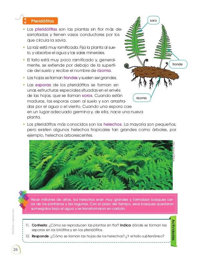 Reproduccion asexual de las plantas ejemplos de metafora