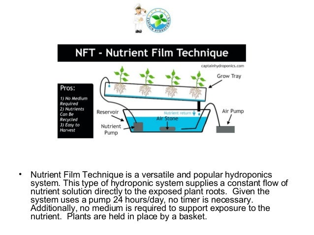 thesis on design of a hydroponic system Design and plan of a modified hydroponic shipping a thesis submitted to the hydroponic growing system in containerized growing system.