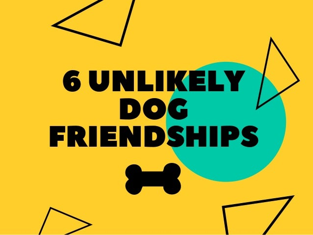 6UNLIKELY DOG FRIENDSHIPS