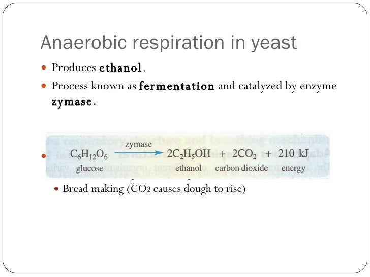 anaerobic respiration in yeast essay Anaerobic respiration is the process of producing cellular energy without oxygen  anaerobic respiration is a relatively fast reaction and produces 2 atp, which is.
