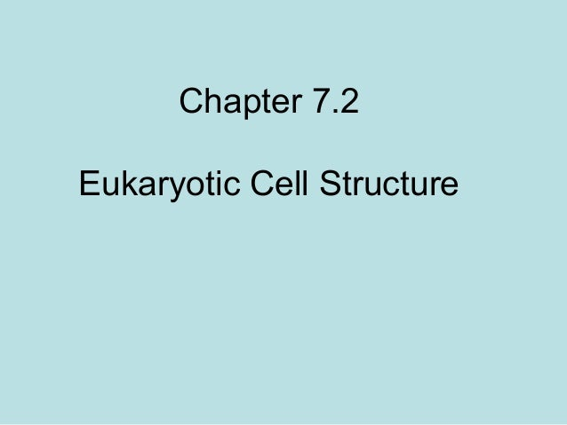Chapter 7.2 Eukaryotic Cell Structure