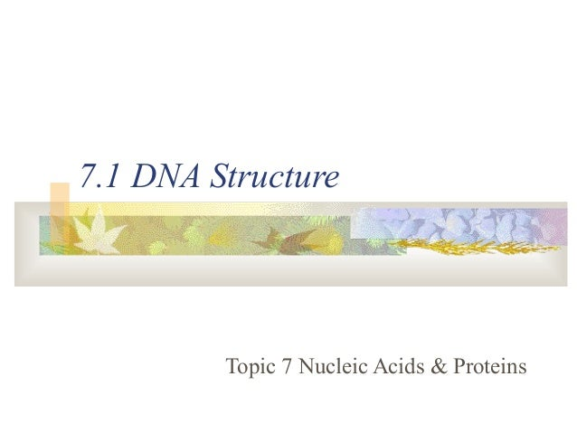7.1 DNA Structure Topic 7 Nucleic Acids & Proteins