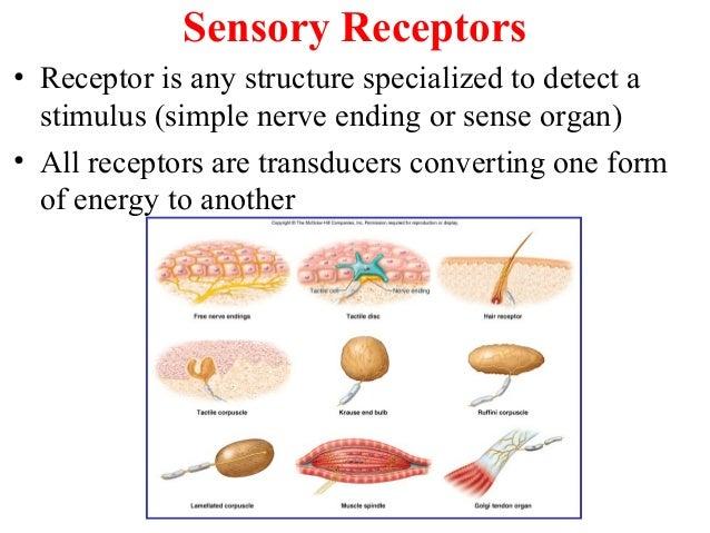 7. The Sense Organs