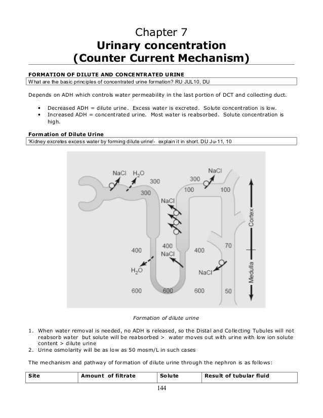 7  urinary concentration (countercurrent mechanism)