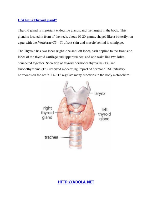 what does the thyroid do? - how to treat hypothyroidism?, Human Body