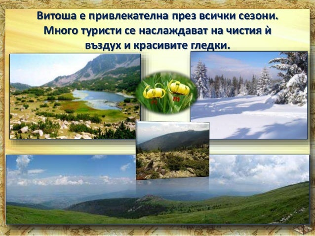 Най-високият връх на Витоша – Черни връх (2 290 м).