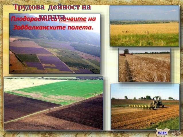 """Прочутата българска роза се отглежда в  Карловското и Казанлъшкото поле.  """"Долината на розите"""" е известна в целия свят.  Р..."""